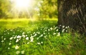 marche et sophologie, se reconnecter avec la nature